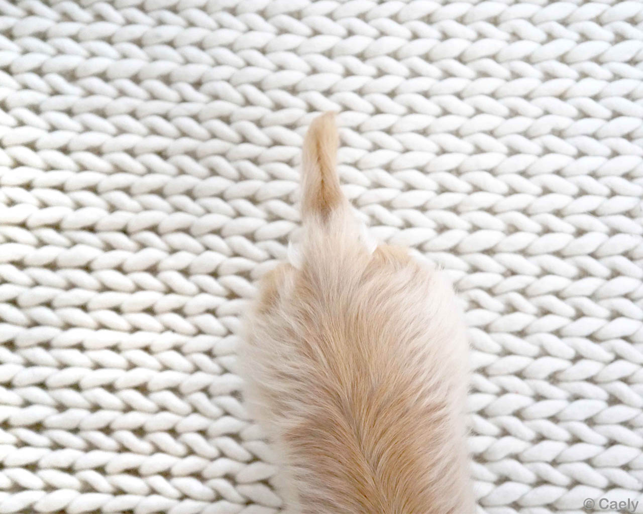 woolen white and brown dog modern braided accent rugs